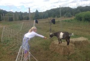 Moraine Farm Festival nubian goats