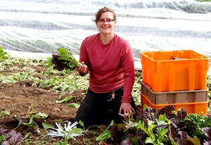 Hadley harvests red mustard