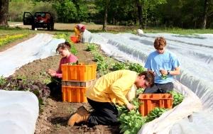 Hadley, Tim, Henry, Liz harvesting