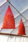 popcorn drying in Moraine Farm greenhouse