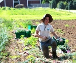 Sarah, harvesting onions